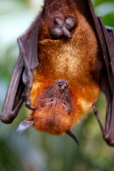 A bat, photographed without zooming!