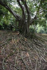 Amazing tree